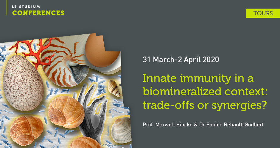 Innate immunity in a biomineralized context: trade-offs or synergies?