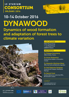 DYNAWOOD Dynamics of wood formation and adaptation of forest trees to climate variation