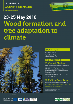 Wood formation and tree adaptation to climate