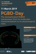 PGBD-Day, the domesticated PGBD5 transposase from its molecular characterization to its physiological roles